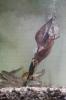 Eisvogel taucht erfogreich